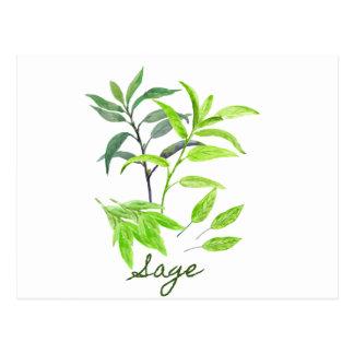 Watercolor herb sage illustration postcard