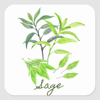 Watercolor herb sage illustration square sticker