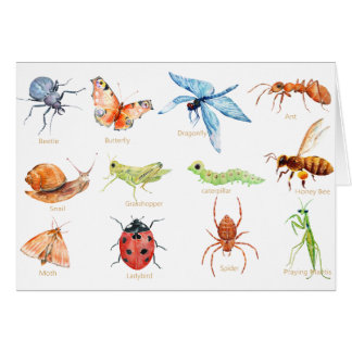 Watercolor insect illustration card
