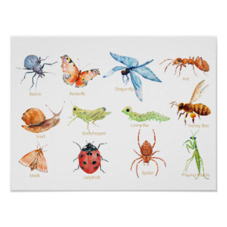 Watercolor Insect Illustration Nursery Print