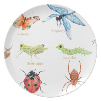 Watercolor insect illustration plate