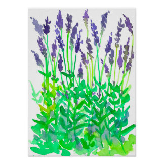 Watercolor Lavender Flower Garden Poster