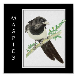 Watercolor Magpie in Bird, Animal Collection Poster