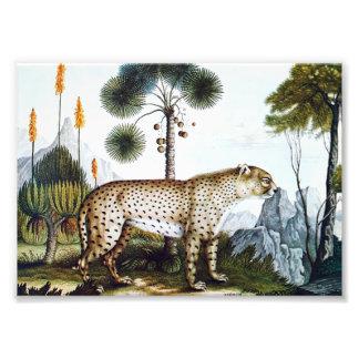 Watercolor of a Cheetah (Zotl) Photo Print