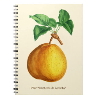 "Watercolor of Pear ""Duchesse de Mouchy"" Notebooks"