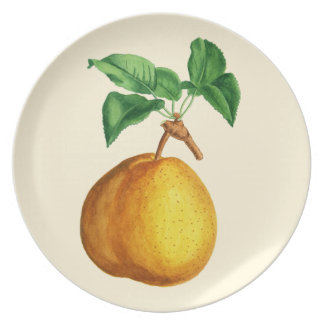"Watercolor of Pear ""Duchesse de Mouchy"" Plate"