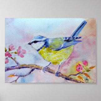 Watercolor Painting Bluetit Blue bird Poster