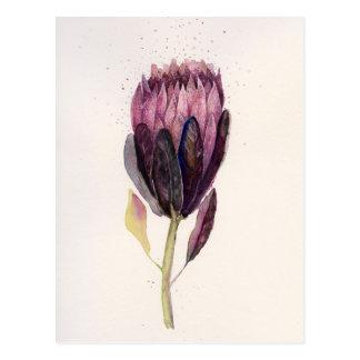 Watercolor Protea Postcard