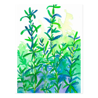 Watercolor Rosemary Herb Blue Postcard