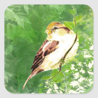 Watercolor Song Sparrow Bird in Forest Art Square Sticker