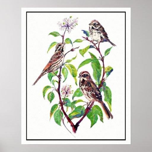 Watercolor Sparrow Birds on Dogwood Art Poster
