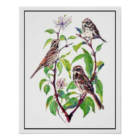 Watercolor Sparrow Birds on Dogwood Art Poster