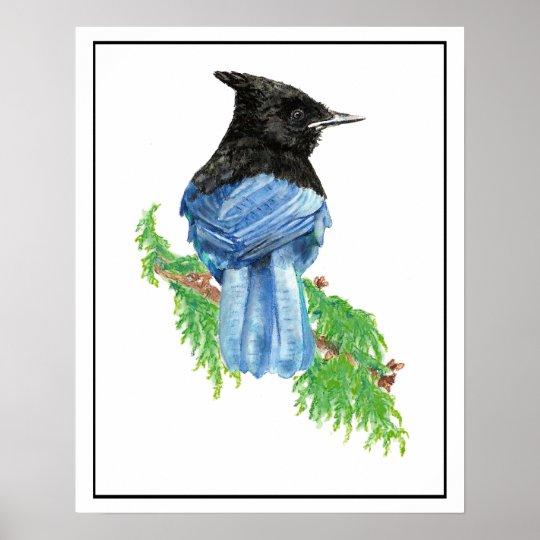 Watercolor Stellar Jay Bird Nature Art Poster