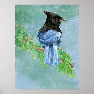 Watercolor Stellar Jay Bird Nature Poster