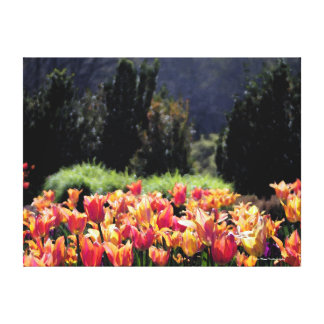Watercolor style Tulips in Orange Canvas Print