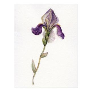 Watercolor violet Iris Postcard