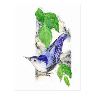 Watercolor White Breasted Nuthatch - Bird Postcard