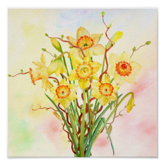 Watercolor Yellow Daffodils Spring Flowers Poster