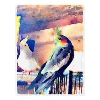 Watercolour Cockatiel Postcard