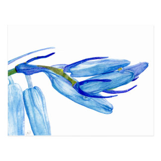 Watercolour Spring Bluebell Woods| Post Card