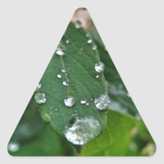 Waterdrops on Leaf Triangle Stickers