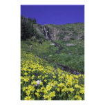 Waterfall and wildflowers in alpine meadow, photograph