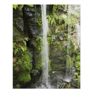 Waterfall, Temperate rainforest, New Zealand. Poster