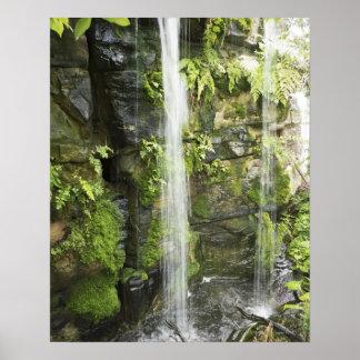 Waterfall, Temperate rainforest, New Zealand. Print