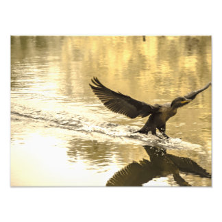 Waterfowl in pond print