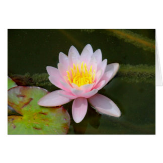 """"""" Waterlilly """" Card"""
