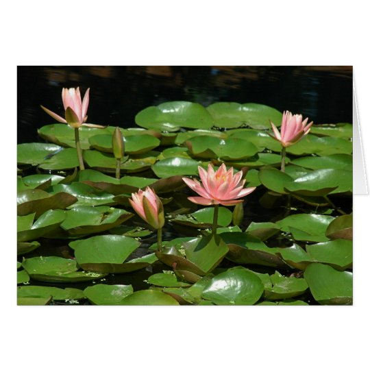 Waterlily 4 card