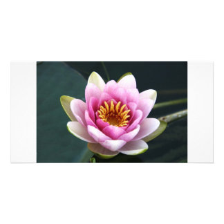 Waterlily Picture Card