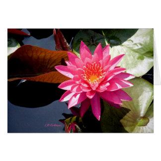 Waterlily Rose II Card