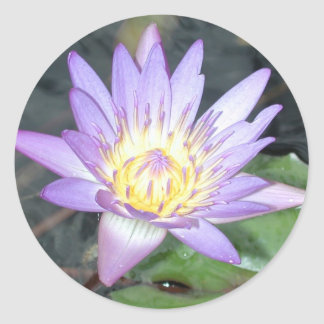 Waterlily Sticker