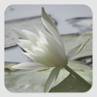 Waterlily Stickers