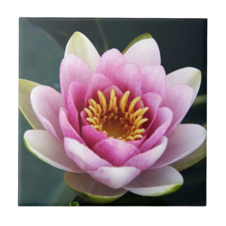 Waterlily Tile