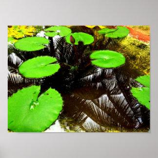 Waterplants Poster