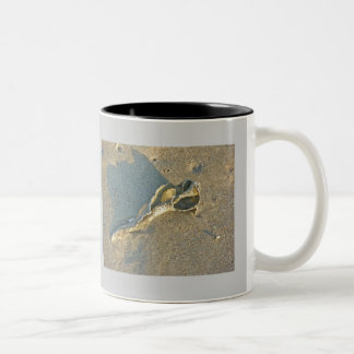 Wave-Washed Shell Cape Cod Items Two-Tone Coffee Mug