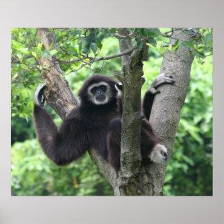 Waving monkey poster