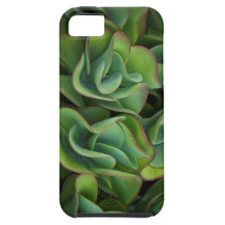 Wavy Green Succulents iPhone 5 Case