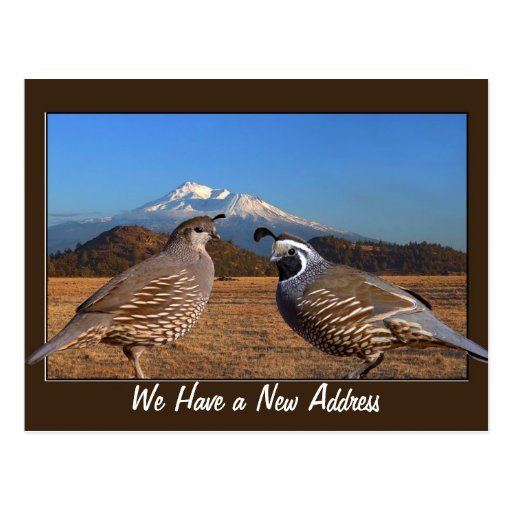 WE HAVE A NEW ADDRESS POSTCARDS