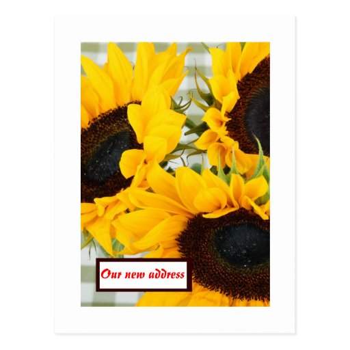We have moved with sunflowers New address Post Cards