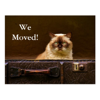 We Moved! New Address Announcement cat in suitcase Postcard