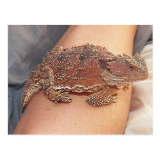 We named the horned toad: Ho'Dee Towd...Kathy(AH) Post Card
