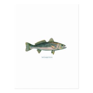 Weakfish Postcard
