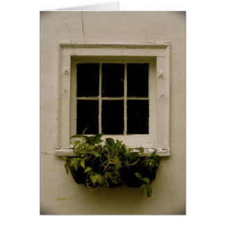 Weathered window with plants card