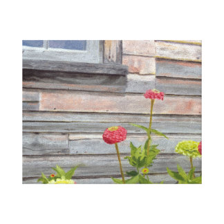 weathered wood and zinnias canvas print