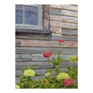 weathered wood and zinnias poster