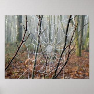 Web d'affiche européenne d'araignée de jardin poster
