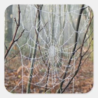 Web of European Garden Spider Sticker
